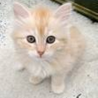 Photo de profil de Cheska