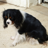 Photo de profil de Chanel