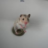 Photo de profil de Quinny