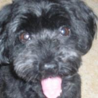 Photo de profil de Snoopy
