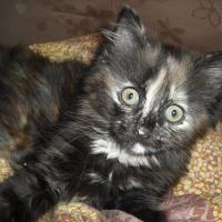 Photo de profil de Elsie