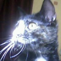 Photo de profil de Lilith