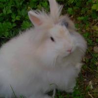 Photo de profil de Peluche