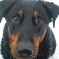 Photo de profil de Attila