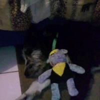 Photo de profil de Titi