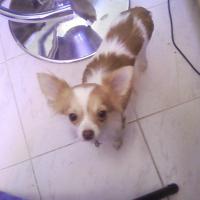 Photo de profil de Desanka