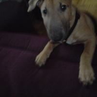 Photo de profil de Drasko