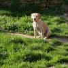 Photo de Lassie