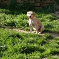 Photo de profil de Lassie