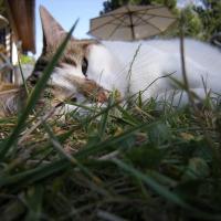 Photo de profil de Nougatine
