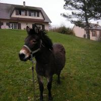 Photo de profil de Macaron