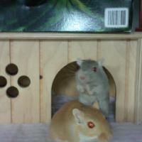 Photo de profil de Holly et dolly