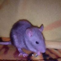 Photo de profil de Kiara