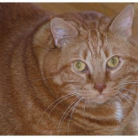 Photo de profil de Garfield