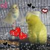 Photo de Kiwi et perle