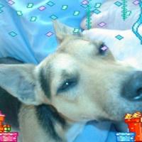 Photo de profil de Bidule