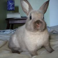 Photo de profil de Jasper