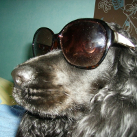 Photo de profil de Brume