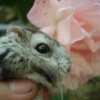 Photo de profil de Bambou