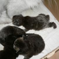 Photo de profil de Les 4 chatons