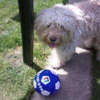 Photo de profil de Toby