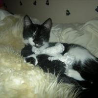Photo de profil de Elka