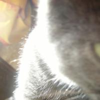 Photo de profil de Désir