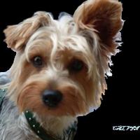 Photo de profil de Calvin