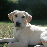 Photo de profil de Rox