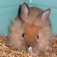 Photo de profil de Biscuit