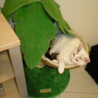 Photo de profil de Louna
