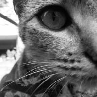 Photo de profil de Mia