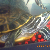 Photo de profil de Pipi