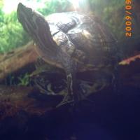 Photo de profil de Boulette