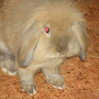 Photo de profil de Belle
