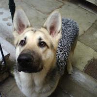 Photo de profil de Dinka