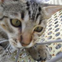 Photo de profil de Minou