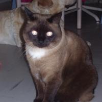 Photo de profil de Ramsès