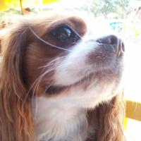 Photo de profil de Coeurlye