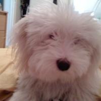 Photo de profil de Candide