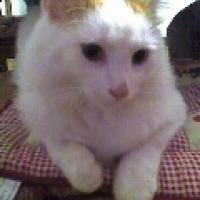 Photo de profil de Sunn