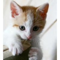 Photo de profil de Filou