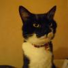 Photo de Mamiechat du chat