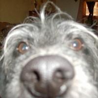 Photo de profil de Ulysse