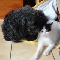 Photo de profil de Lola