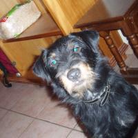 Photo de profil de Bozo surnom zobo