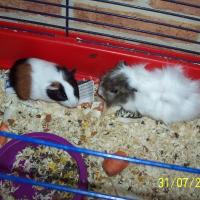 Photo de profil de Salami et rosette
