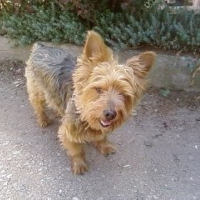 Photo de profil de Pacha