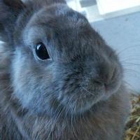 Photo de profil de Acajou