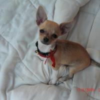 Photo de profil de Mina